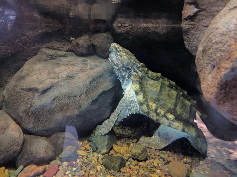 9adb927ed05337 Australia Zoo  More than Just Crocodiles and Stingrays